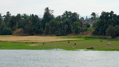 eine Reise durch gypten (Ina Hain) Tags: green nature water river landscape tiere wasser natur pflanzen nile afrika grn nil ufer fluss landschaft gypten leben nilkreuzfahrt gypten20152