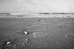 Egmond beach (25/8) Tags: minolta himatic himatic7sii adox adoteciii cms20 egmond