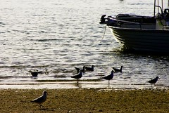 Birds, boats and tides. (GraceVerity) Tags: sea shore ocean beach tide birds boats travels qld australia