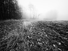 Brouillard toujours. (steph20_2) Tags: campagne countryside picardie oise panasonic lumix m43 714 monochrome monochrom brouillard brume noir noiretblanc ngc blanc black bw white skanchelli hiver winter