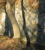 Shadows that I love (Sappho et amicae) Tags: shadows sapphoetamicae željkagavrilović canon450d