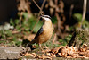 _F0A7343.jpg (Kico Lopez) Tags: galicia lugo miño sittaeuropaea spain trepadorazul aves birds rio