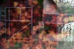 время ночных животных* (horilyc) Tags: film мульт мульти даблэкспо даблэ дабл mult päällekkäisvalotus päällekkäiskuva dubbelexponering vícenásobnáexpozice doppiaesposizione duplaexposição dvigubaekspozicija olympusom2 zuiko5018 двойнаяэкспозиция konicavx400 мультиэкспозиция плёнка colour doubleexposure mehrfachbelichtung multiple multipleexposure multi яси цвет multy yasi multiexposure 2010 doppelbelichtung analogue analog photography