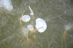 Seebad Mörbisch (anuwintschalek) Tags: nikond7000 d7k 18140vr austria talv winter january 2017 burgenland mörbisch mörbischamsee seebdamörbisch neusiedlersee lake neusiedl see järv jää eis ice