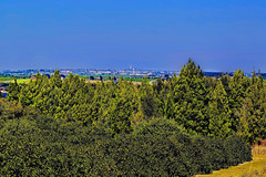 Distant view of the Bok Tower Gardens from the nearby town of Hillcrest Heights, Florida, USA (Jorge Marco Molina) Tags: boktowergardens hillcrestheights florida usa centralflorida sunshinestate rollinghills orangegrooves