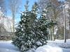 Winterimpressionen (1snomi1) Tags: schnee winter natur draussen weiss