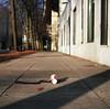 One man's trash, another man's treasure? (Zeb Andrews) Tags: hasselblad film trash mediumformat portland oregon urban sidewalkart spill coke kodakportra400 6x6
