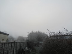 Monday, 23rd, Looking foggy IMG_2174 (tomylees) Tags: january 2017 23rd monday essex morning winter weather mist frost cold