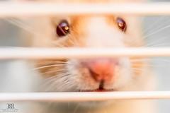 Taco The Hamster (Photon-Huntsman) Tags: sony sonyalpha sonya6000 a6000 oss fe 50mm f18 bokeh macro smile circle