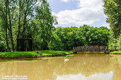 WestGH_DSC6022 (Nick Woods Photography) Tags: trees lake water landscape swan pond nt greenery nationaltrust muteswan lakescene waterscape waterreflections westgreenhouse pondscene westgreenhousegarden