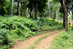 The road through the woods of Dare Nature Wayanad
