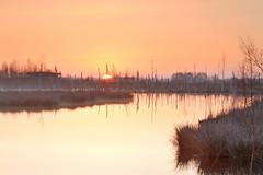 Golden sunrise (Rene Mensen) Tags: reflection nature sunrise gold nikon veen nikkor moor veld drenthe reflectie amsterdamsche bargerveen zwartemeer bourtangermoor d5100
