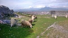 Rozafa Castle -  Shkoder 0979 (Chris Belsten) Tags: castle albania archeaology shkoder rozafa illyrian