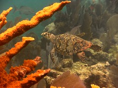 DIGITAL CAMERA (orangejoshuas) Tags: statepark scuba elbow johnpennekamp