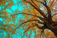 Tree (Pete Mosh) Tags: new york trees winter sky orange brown plant cold color tree fall grass america photo spring nikon warm flickr seasons outdoor leafs flushing 2015 d3300