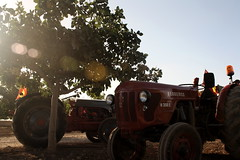 IMG_0371 (ACATCT) Tags: old españa tractor spain traktor agosto toledo antiguo massey pistacho tembleque barreiros 2015 bustards perdices liebres avutardas ff30ds r350s