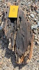 IMG_0031.jpg (DrPKHouse) Tags: arizona unitedstates loco bullheadcity bullhead petwood