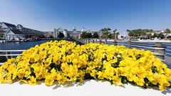 Disneyworld Yacht Club 2010 (hz536n/George Thomas) Tags: 2010 flora flower florida waltdisneyworld disney disneyworld lake yachtclub canon5d cs6