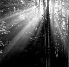 Forest Light © Alex Djordjevic