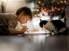 Adam and the cat (underneath the Christmas tree) (iwona_podlasinska) Tags: cat child christmas winter tree bokeh lights reflection pet indoor