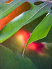 The Goldfish Pond (Steve Taylor (Photography)) Tags: goldfish art digital fish green yellow orange red texture leaf bokeh