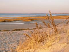 fullsizeoutput_dec (ericssonbo24) Tags: beach sunset evening sand water sky seagrass lowtide colors winter nature