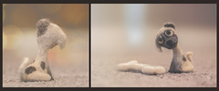 sit wait (rockinmonique) Tags: felting miniature toy diptych dog doggie cute sweet puppy moniquew canon canont6s tamron copyright2017moniquew