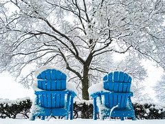 Have A Seat ((Jessica)) Tags: snow blizzard snowstorm winter cold white tree treebranches slowladenbranches chairs bluechairs lawnchairs blue blueandwhite freezing iphone iphone6s iphoneography iphonephotography mobilephotography tufts tuftsuniversity somerville medford ma massachusetts boston seasons season seasonal outdoors fallingsnow lowangle shotoniphone eastcoast winterstorm winterstormlexi unitedstates us