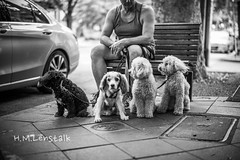 L1009050 (H.M.Lenßtalk) Tags: leica m typ 240 summilux summiluxm 50mm 50 f14 14 114 oz aussie australia australian street sydney black white people urban life city asph 11450 dogs dog funny