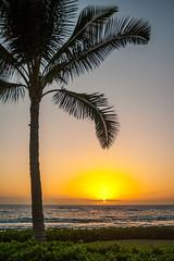 Hawaiian Sunset (FotoMemi) Tags: flickr kauai nikond70 poipu scenery d70 digital nikon nikkor nikondx dx pacific waves sun palm