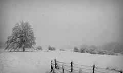 Nevada 01BN.- Snow  01BW. Nº 183 (Yon Ibarrra (+ 1.000.000 VISITAS)) Tags: nieve snow blancoynegro blackandwhite tormenta storm arbol tree fence valla cielo sky alavaaraba opacua euskadi paisvasco basquecountry españa spain europe landscape paisaje outdoor nature naturaleza