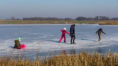 Ice skating fever @ Botshol (Netherlands) (PaulHoo) Tags: lumix ice skating recreation nature winter landscape 2017 botshol vinkeveen polder grootmijdrecht color people candid reflection sled holland netherlands