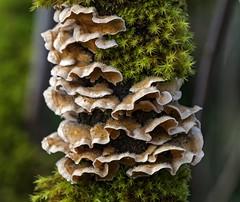 Bracket Fungus and Moss