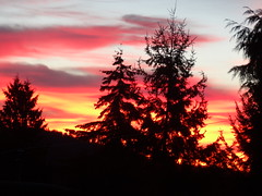 Morning sky. (France-♥) Tags: 255 sunrise morning ciel arbre tree janvier rouge contraste vancouver canada january sky clouds nuages