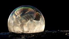 Frozen Bubble - Explored - Feb 8th, 2017 (Sandra_Gilchrist) Tags: sandragilchrist frozensoapbubble frozenbubble frozenbubbles soapicebubble soapfrozenbubble soapbubble soap ice bubble bubbles rainbow freezing freezingbubble freezingsoapbubble