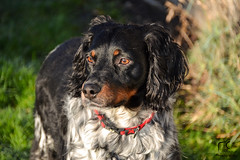 Eliot (Mélanie Du) Tags: world life dog chien pet love nature beautiful animal out photography photo reflex amazing nikon photographie outdoor picture pic d3100 nikond3100