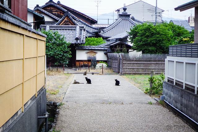 Today's Cat@2015-06-04