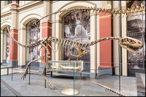 Thumbnail from Museum für Naturkunde (MfN)