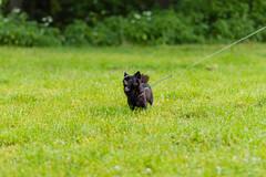 Fotograf_Kwidzyn20150614_09-19-17_spacer_z_psem_na_orientacje_fot_Pawel_Wolochowicz_MG_5089