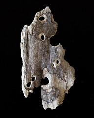 IMG_4979 (j.towbin ) Tags: macro texture nature faces holes bark minimalsim allrightsreserved
