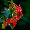 Red and bokeh (Janusz Kudlak) Tags: ilovemywife agnieszka myniu pastuch sony alpha700 best autumn