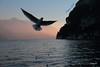 I miei sogni.......per l'anno che verrà.... (Betti52) Tags: lago di garda luce tramonto gabbiano post28122016