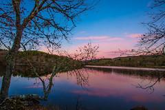 By the river (Artur Tomaz Photography) Tags: barragemdadama beselga blue dam penedono purple river sunset tree water winter