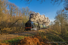 Southern Winter Steam (Nimbus20) Tags: bluebell railway steam winter sunshine southern sussex east blue sky smoke light trees grasses branches train coach loco maunsell urie s15
