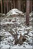 Stubbe och sten 3 (Jonas Thomén) Tags: stubbe stump sten rock stone forest skog träd trees snow snö winter vinter lingon lingonris december