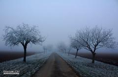 Chemin Brumeux (CH-Romain) Tags: hiver snow neige winter france foret arbre tree feuille nature morte brume brouillard gele chemin paysage landscape voie glace flocon