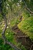Icelandic Birch Trees (Jordan Schwarz Photography) Tags: birke green iceland island glacier gletscher eis vulkan volcano hiking wandern natur landschaft landscape day south süd