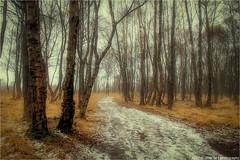 _der_weg_ist_das_ziel (l--o-o--kin thru) Tags: laufen zwillbrockervenn vreden vintage birches birken bäume trees