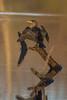 010517-080638 (Glenn Anderson.) Tags: warming feathers beak logs reflection outside outdoors nature animal neuseriver cormarant bird fisher