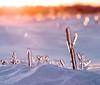 the sun sets on a frozen land (marianna_a.) Tags: ice plant snow landscape setting sun sunset warm cold frozen canada mariannaarmata p3130524